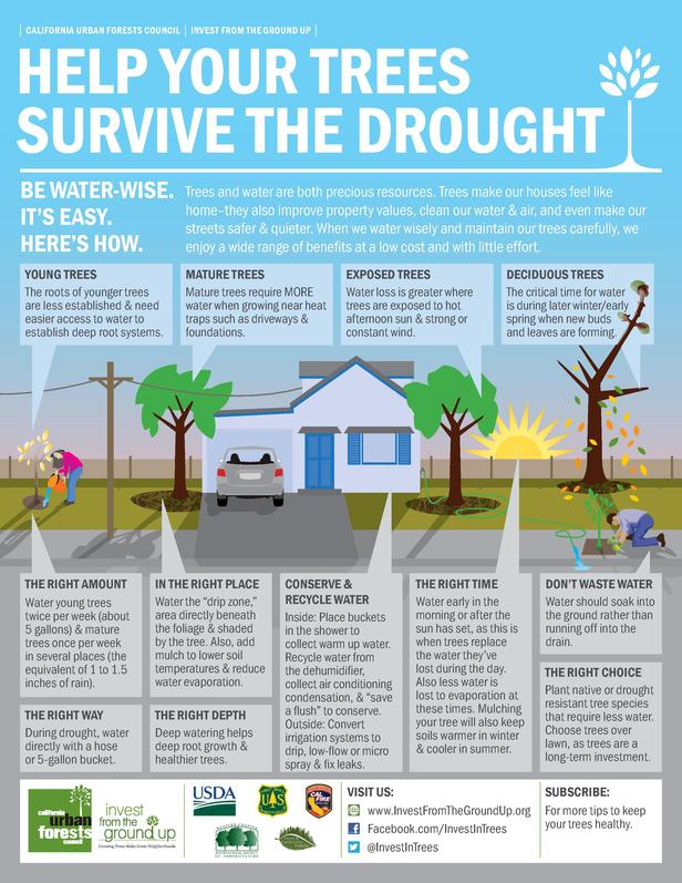 CALIFORNIA URBAN FORESTS COUNCIL     INVEST FROM THE GROUND UP      HELP YOUR TREES SURVIVE THE DROUGHT BE WATER-WISE....