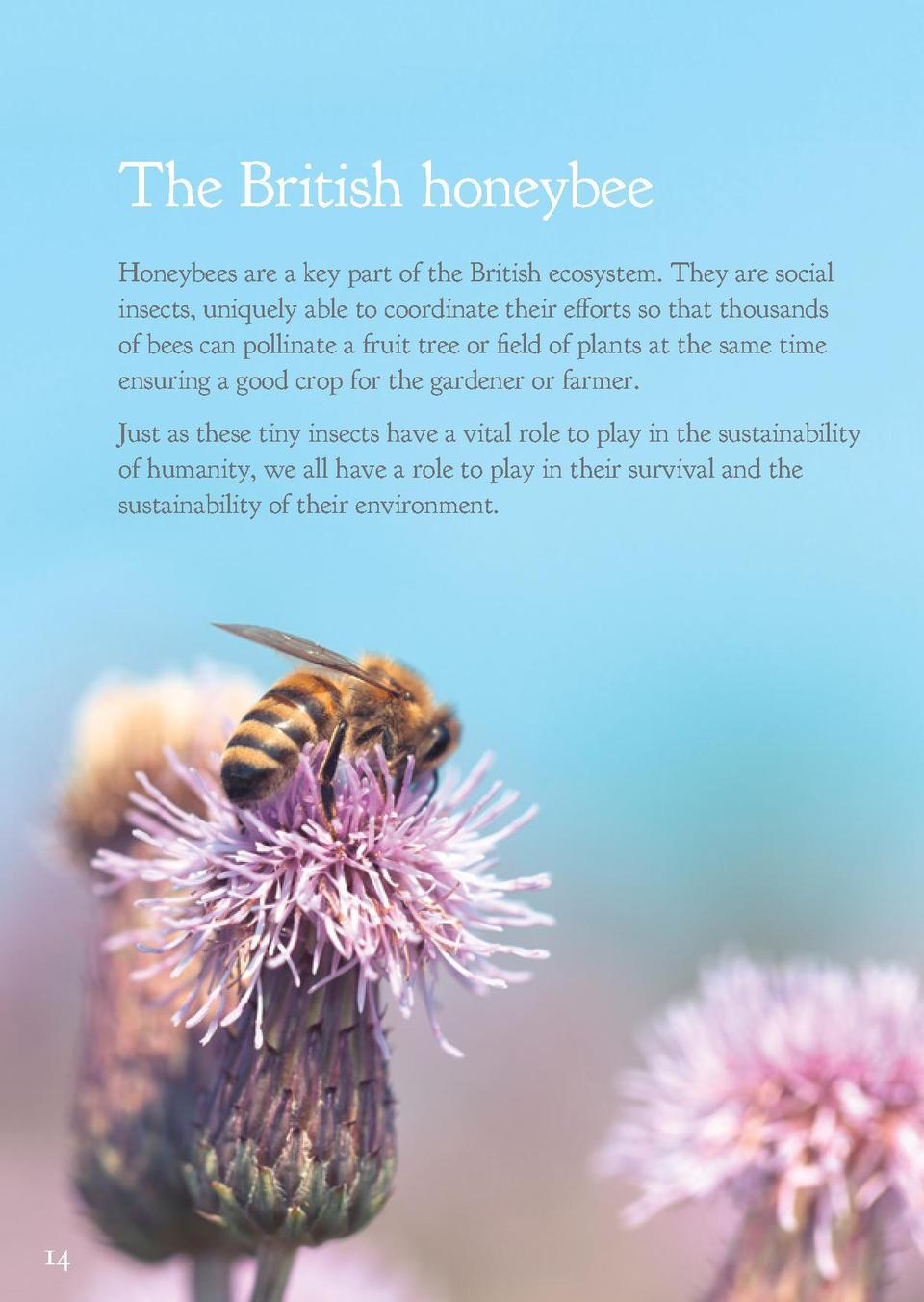 The British honeybee  Save all our bees  Honeybees are a key part of the British ecosystem. They are social insects, uniqu...