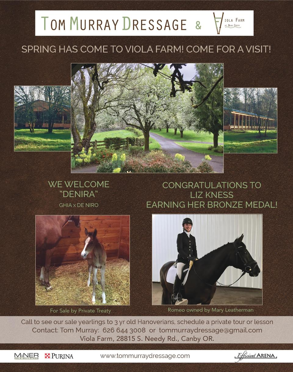 TOM MURRAYDRESSAGE     SPRING HAS COME TO VIOLA FARM  COME FOR A VISIT   WE WELCOME    DENIRA    GHIA X DE NIRO  For Sale ...