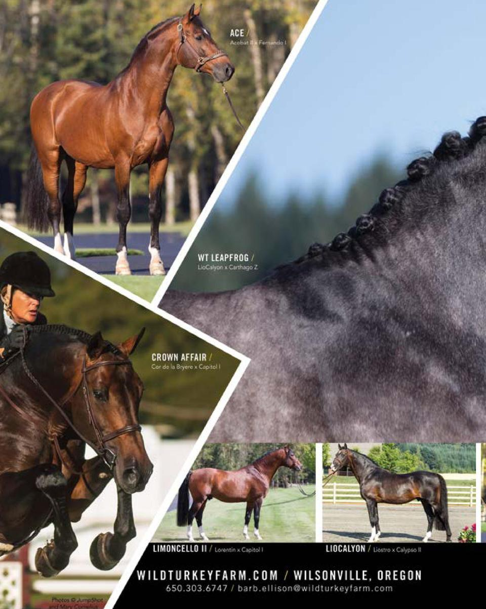The Competitive Equestrian Jan/F : simplebooklet com