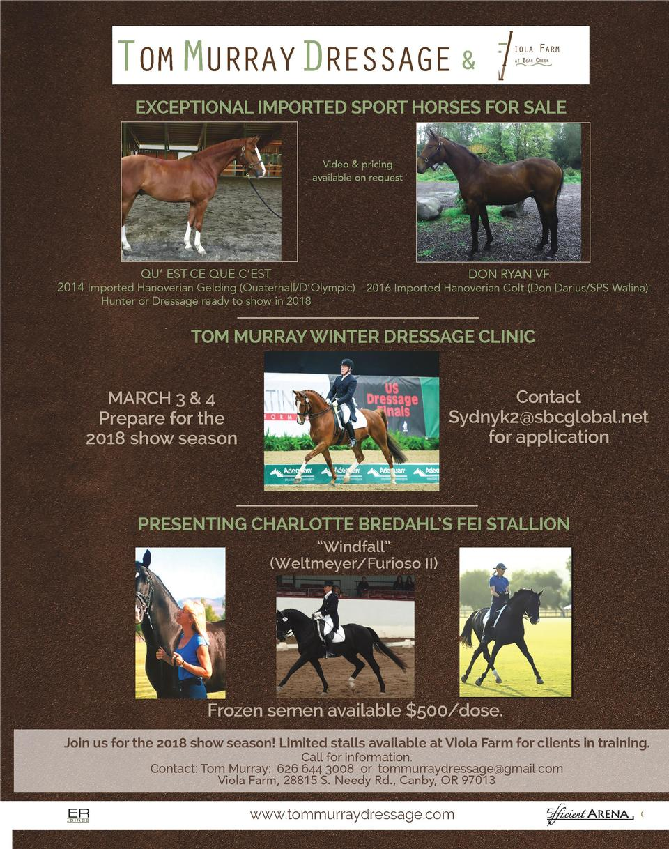 TOM MURRAYDRESSAGE   EXCEPTIONAL IMPORTED SPORT HORSES FOR SALE Video   pricing available on request  QU    EST-CE QUE C  ...