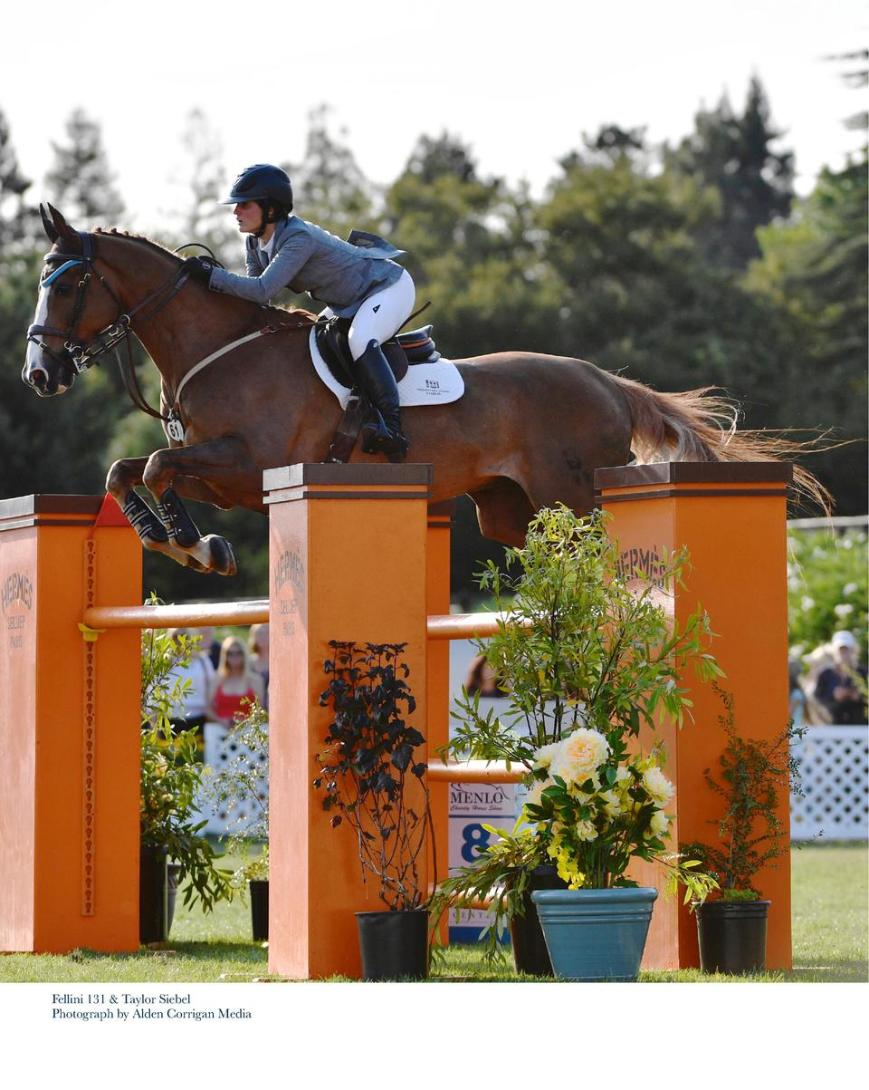 Winners of the  40,000 Stephen Silver Grand Prix Fellini 131   Taylor Siebel victory gallop Photograph by Alden Corrigan M...