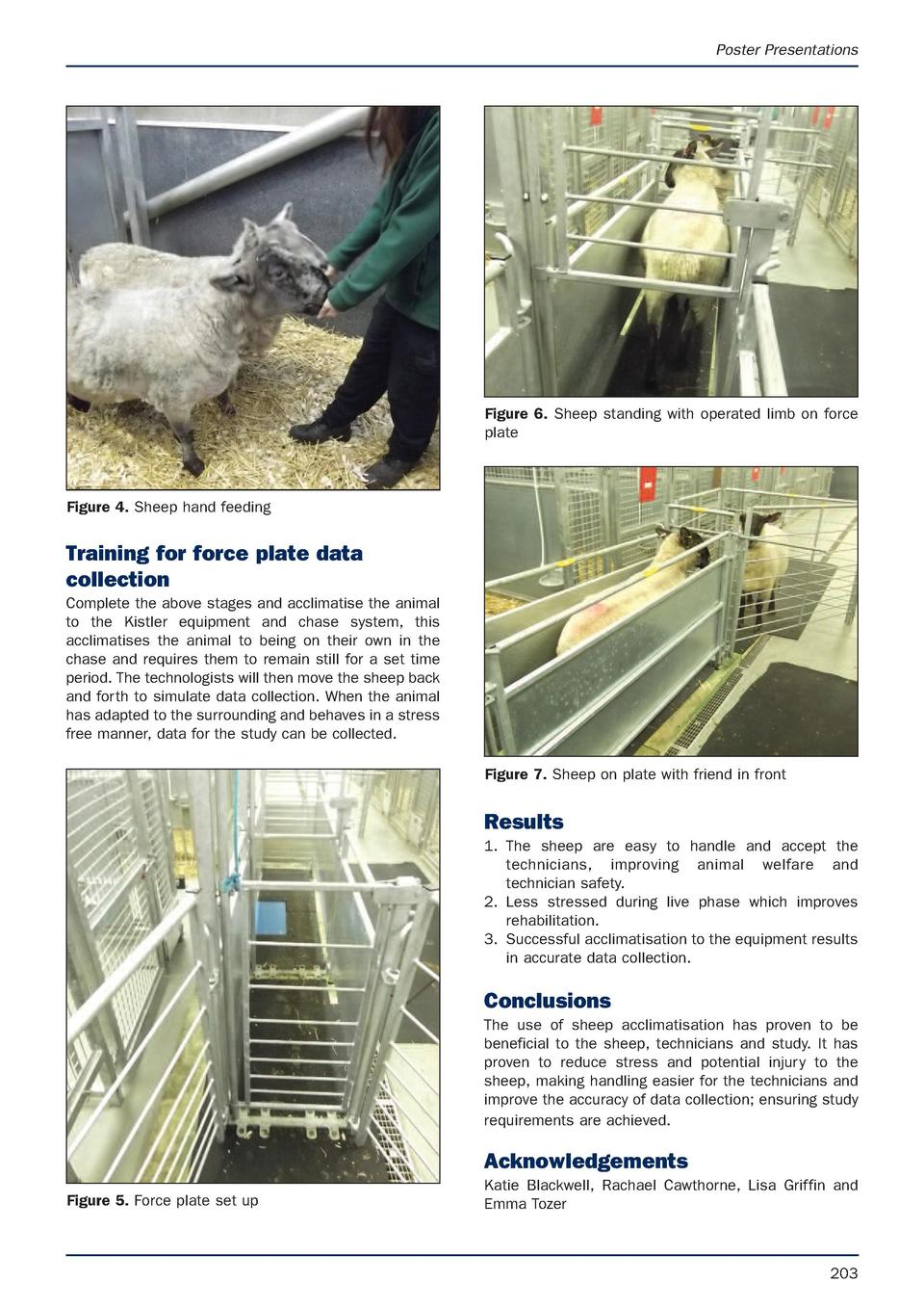 Poster Presentations  Figure 6. Sheep standing with operated limb on force plate  Figure 4. Sheep hand feeding  Training f...
