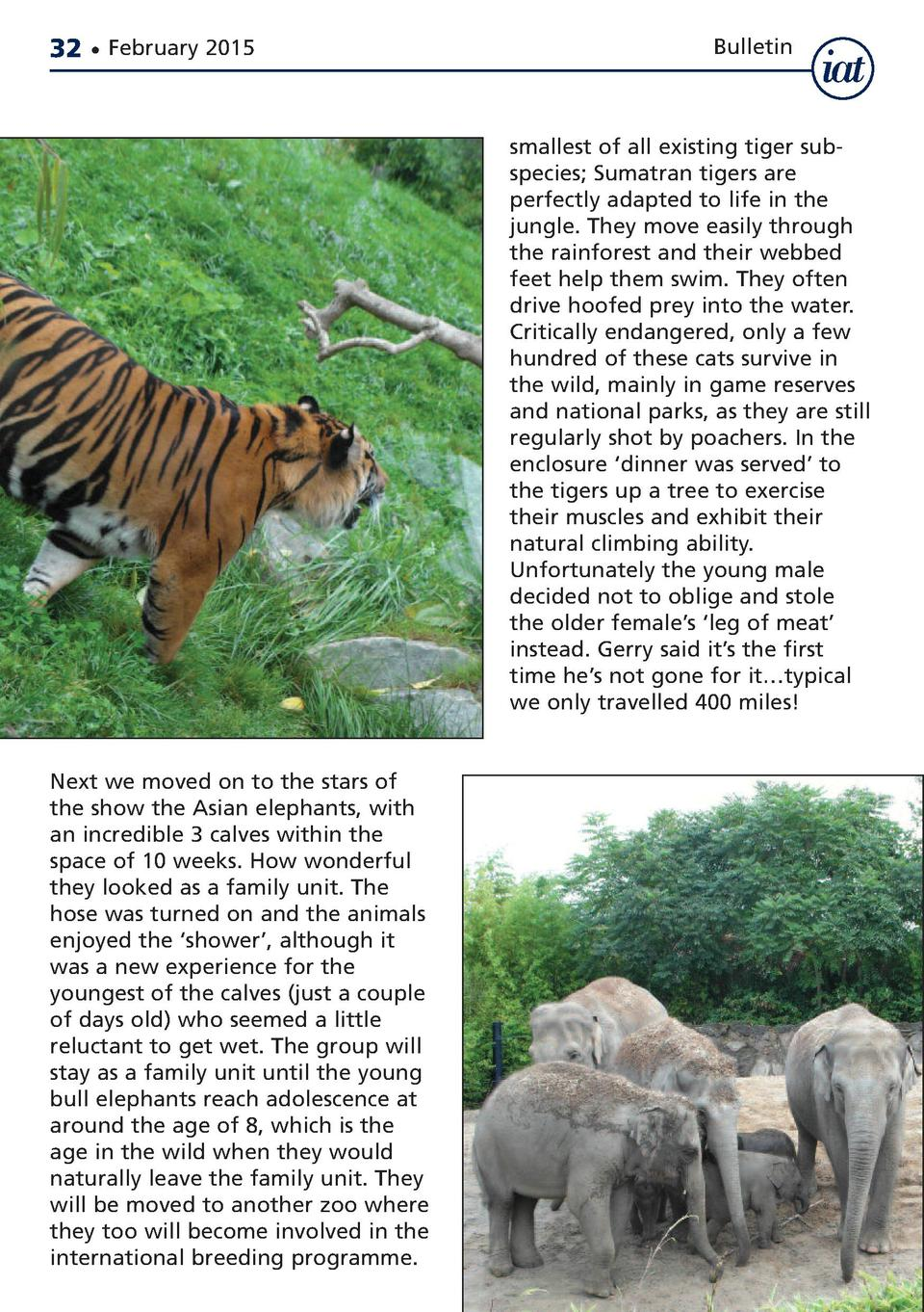 32     February 2015  Bulletin  smallest of all existing tiger subspecies  Sumatran tigers are perfectly adapted to life i...