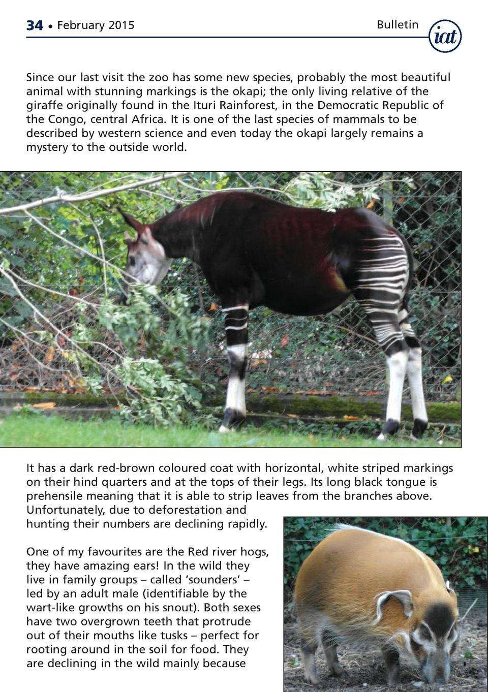 34     February 2015  Bulletin  Since our last visit the zoo has some new species, probably the most beautiful animal with...