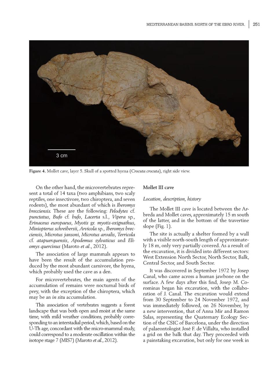 MEDITERRANEAN BASINS. NORTH OF THE EBRO RIVER.  Figure 4. Mollet cave, layer 5. Skull of a spotted hyena  Crocuta crocuta ...