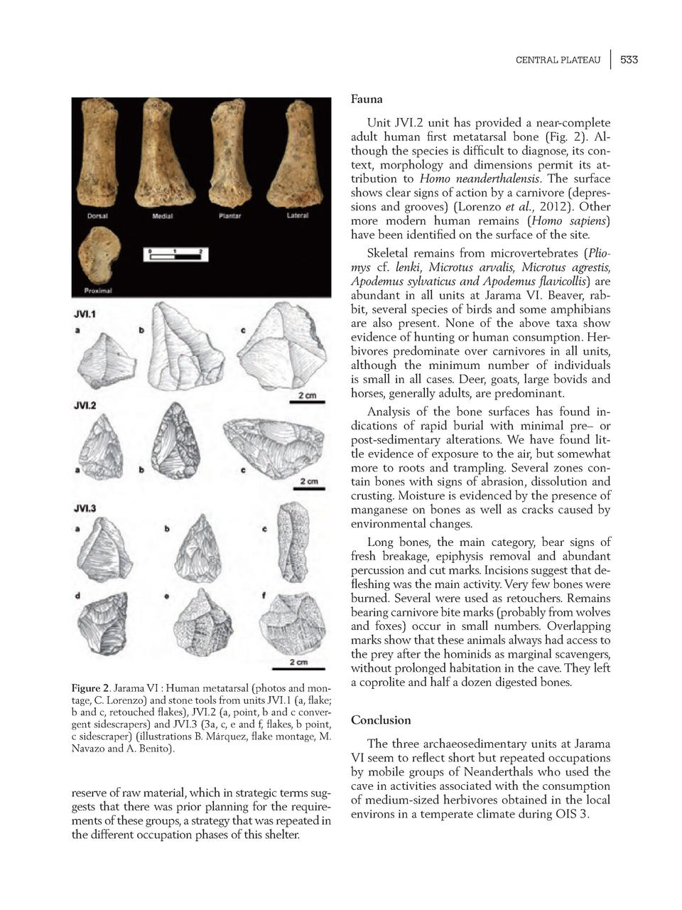 CENTRAL PLATEAU  Fauna Unit JVI.2 unit has provided a near-complete adult human    rst metatarsal bone  Fig. 2 . Although ...