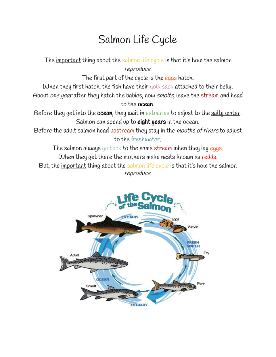 Salmon Life Cycle The     important    about the     thing salmon life cycle    that it   s how the salmon is reproduce   ...
