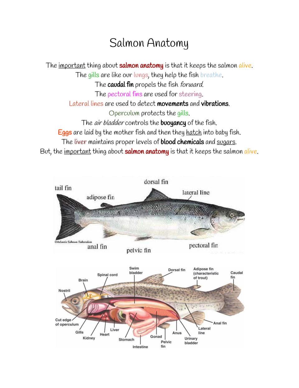 Salmon Anatomy The     important    about     thing salmon anatomy    that it keeps the salmon         is alive. The      ...