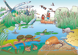 Facts about Wetlands : simplebooklet.com