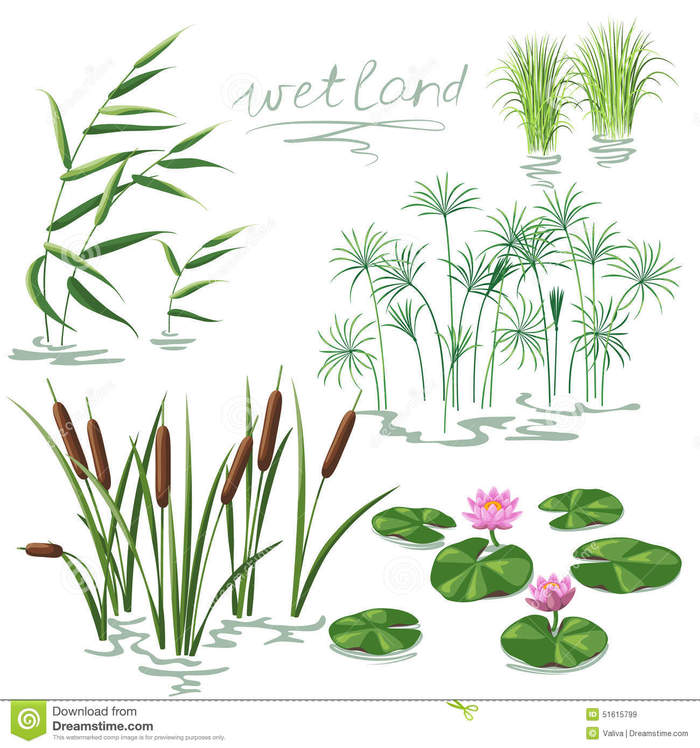 Wetlands Animals And Plants