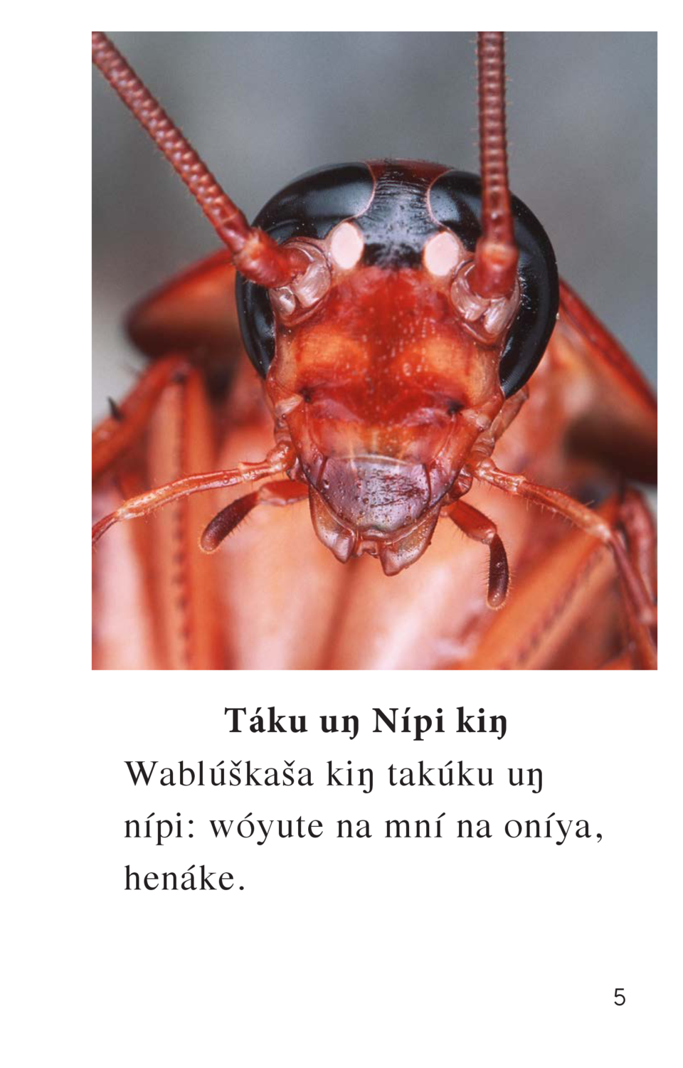 Air goes into a cockroach through its sides.  T  ku u   N  pi ki   Wabl    ka  a ki   tak  ku u   n  pi  w  yute na mn   n...
