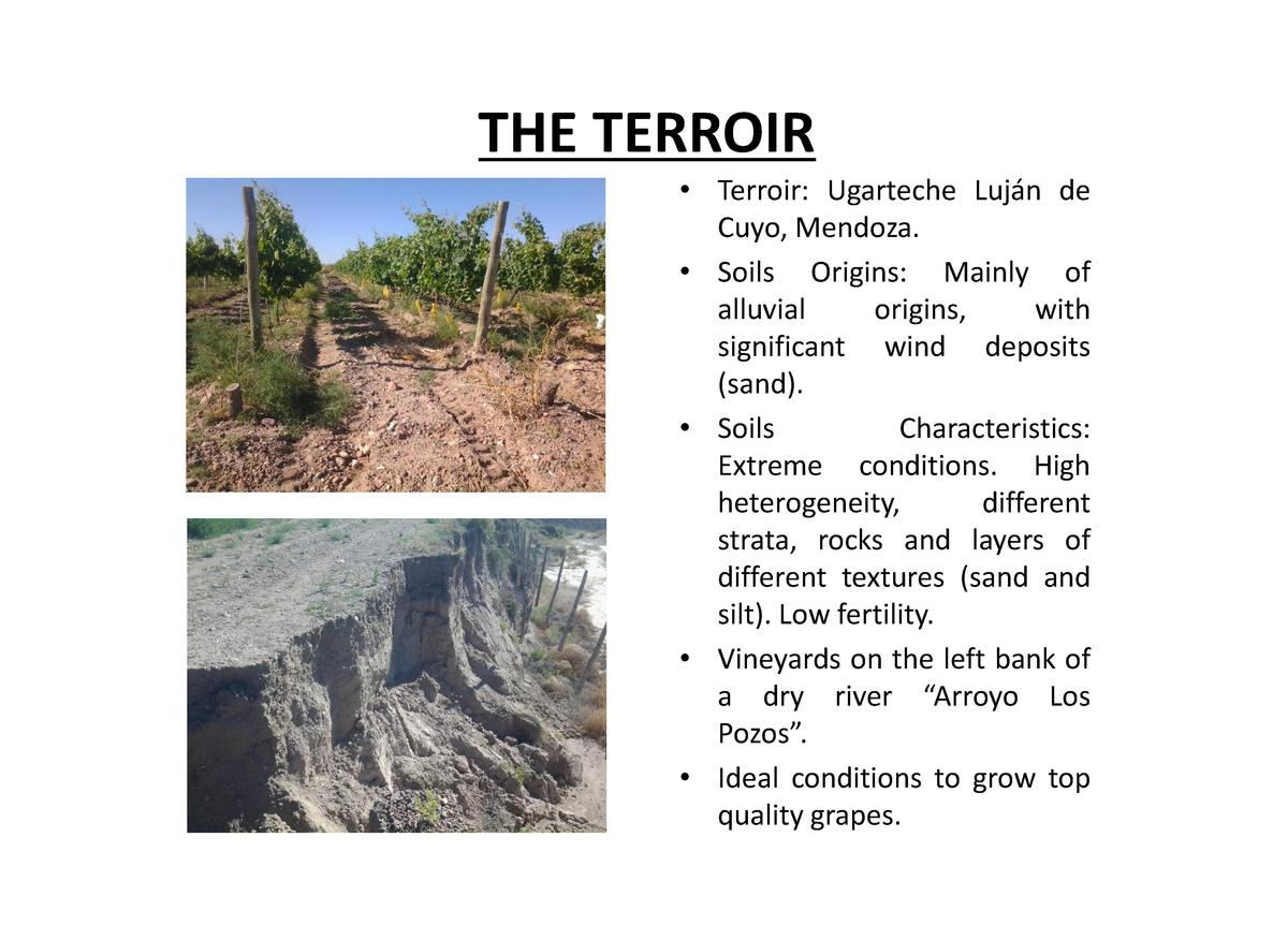 THE TERROIR     Terroir  Ugarteche Luj  n de Cuyo, Mendoza.     Soils Origins  Mainly of alluvial origins, with significan...