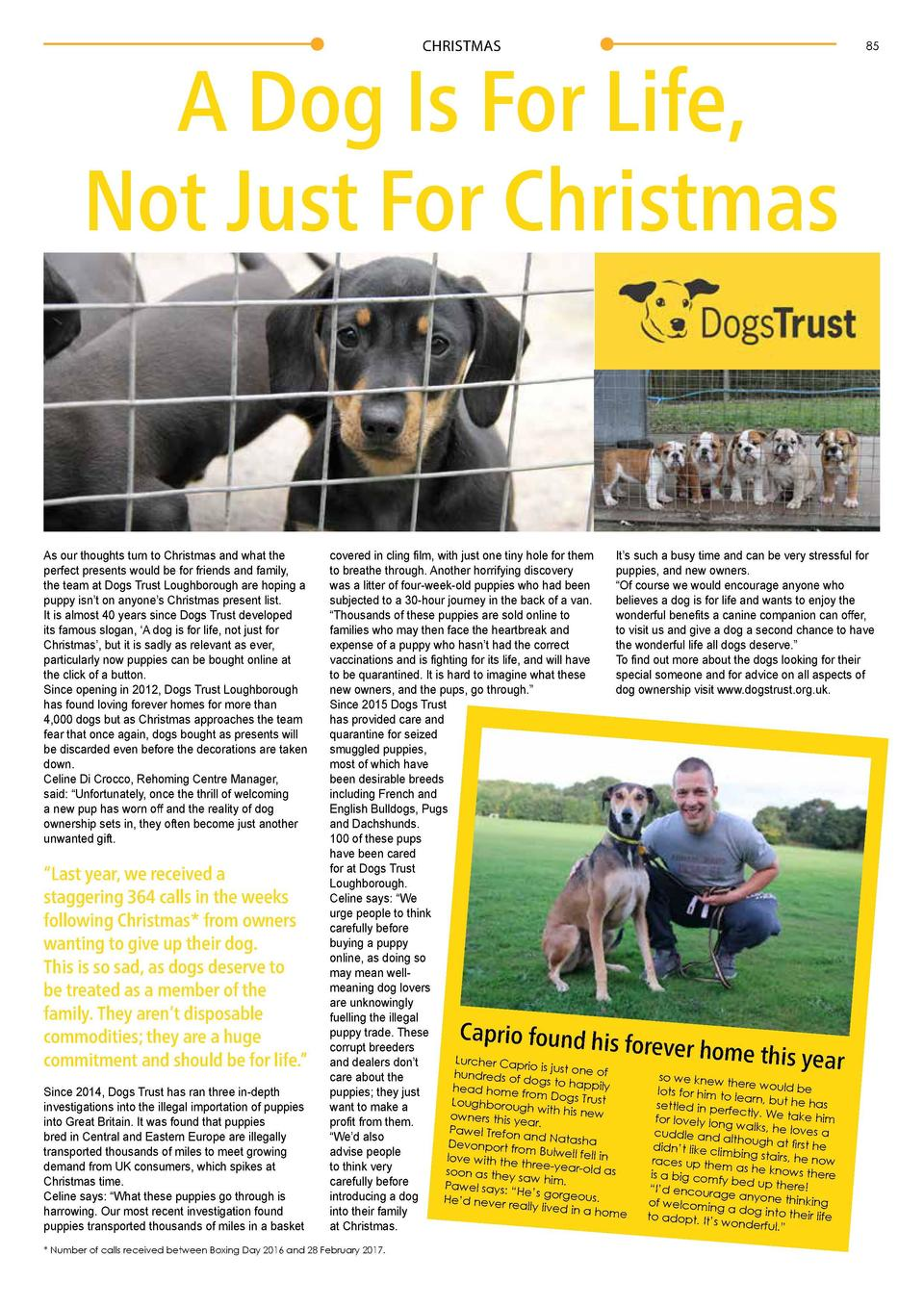 CHRISTMAS  A Dog Is For Life, Not Just For Christmas  As our thoughts turn to Christmas and what the perfect presents woul...
