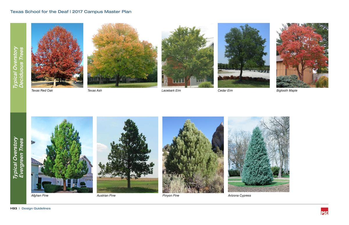 Texas Red Oak  Texas Ash  Lacebark Elm  Cedar Elm  Typical Overstory Evergreen Trees  Typical Overstory Deciduous Trees  T...