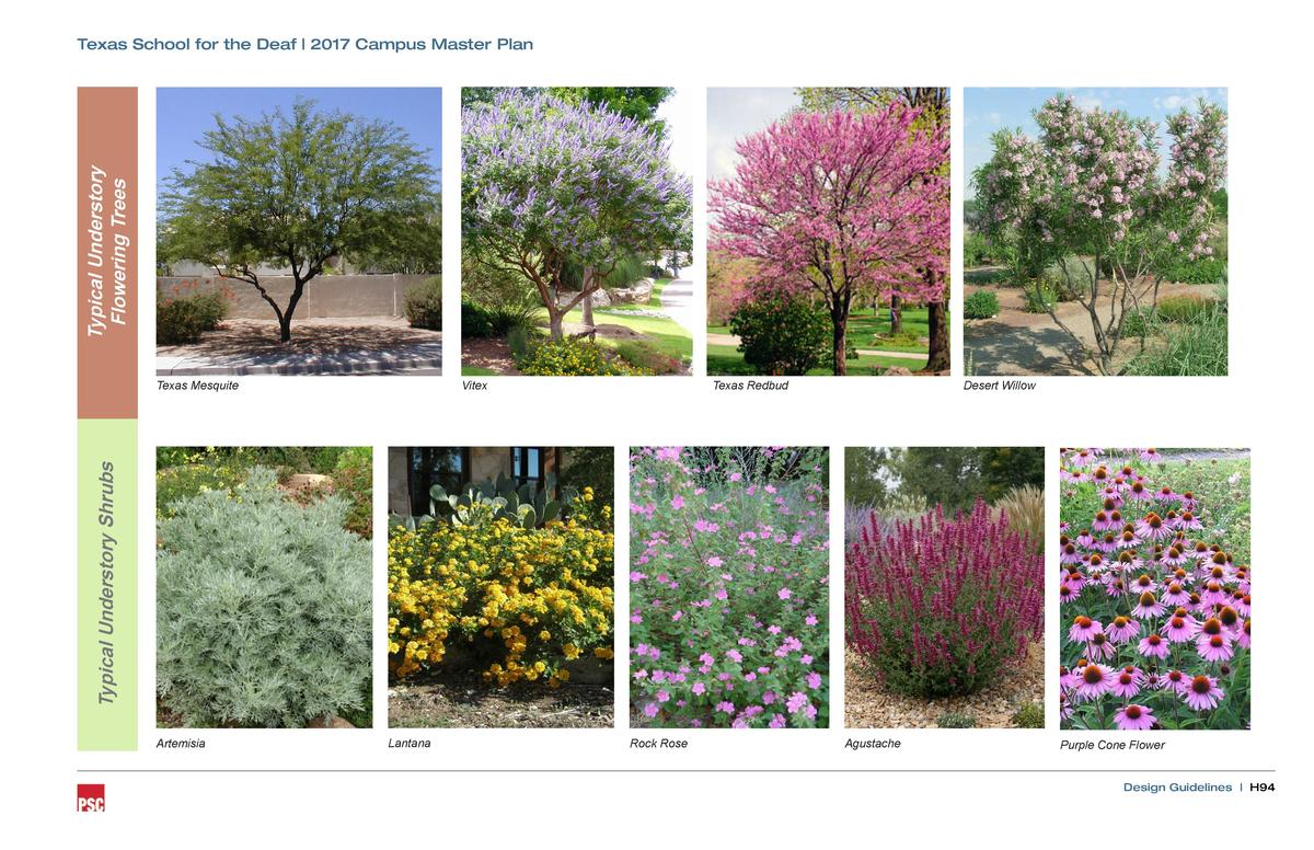Typical Understory Flowering Trees  Texas School for the Deaf   2017 Campus Master Plan  Vitex  Texas Redbud  Desert Willo...