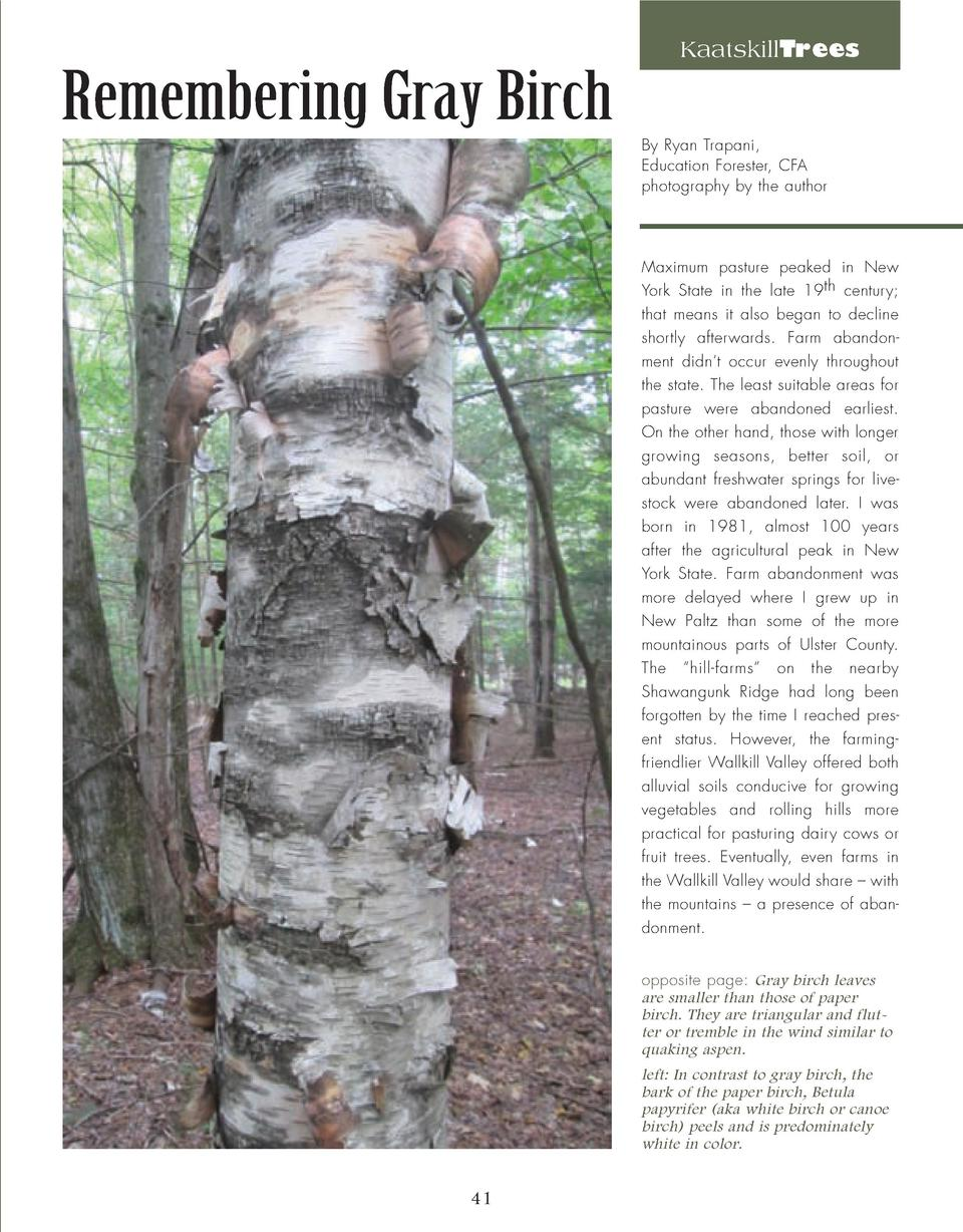 KaatskillTrees  Remembering Gray Birch By Ryan Trapani, Education Forester, CFA photography by the author  Maximum pasture...