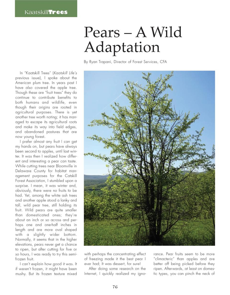 KaatskillTrees  Pears     A Wild Adaptation By Ryan Trapani, Director of Forest Services, CFA In    Kaatskill Trees     Ka...