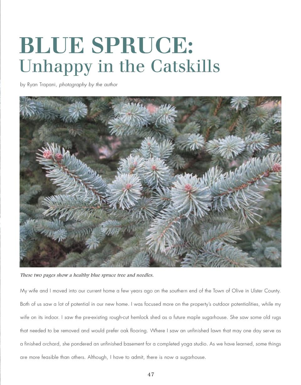 46_50_Blue_Spruce_TREES.qxp_Template 2 19 16 7 36 PM Page 2  BLUE SPRUCE  Unhappy in the Catskills by Ryan Trapani, photog...