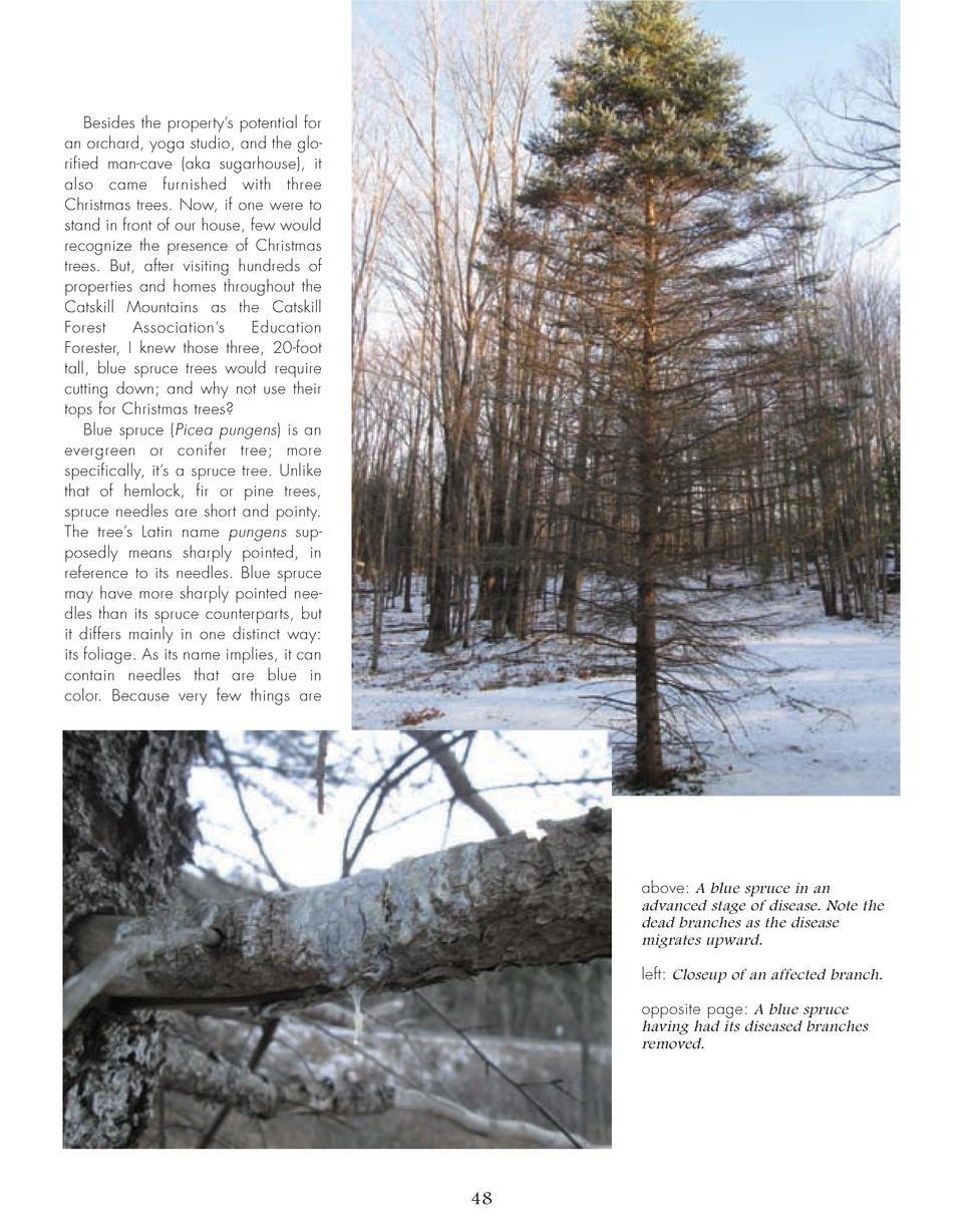 46_50_Blue_Spruce_TREES.qxp_Template 2 19 16 7 36 PM Page 3  Besides the property   s potential for an orchard, yoga studi...