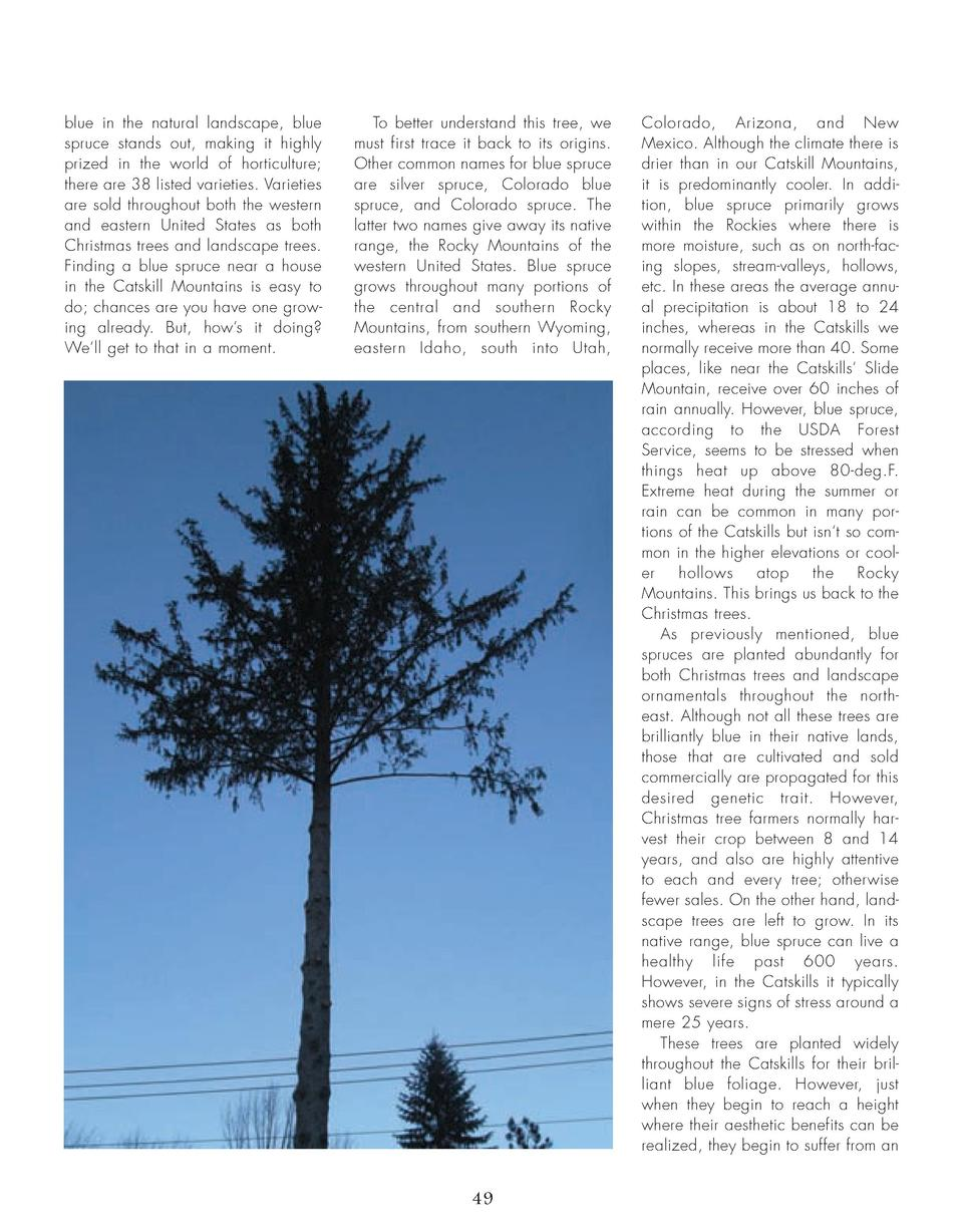 46_50_Blue_Spruce_TREES.qxp_Template 2 19 16 7 36 PM Page 4  blue in the natural landscape, blue spruce stands out, making...