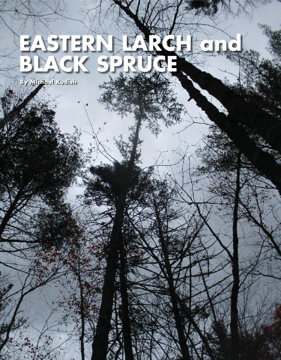 EASTERN LARCH and BLACK SPRUCE By Michael Kudish