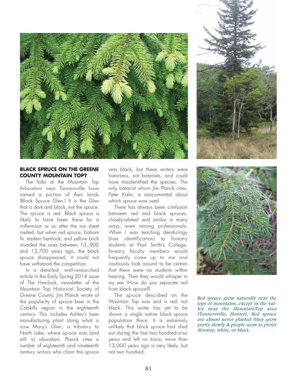 BLACK SPRUCE ON THE GREENE COUNTY MOUNTAIN TOP  The folks at the Mountain Top Arboretum near Tannersville have named a por...