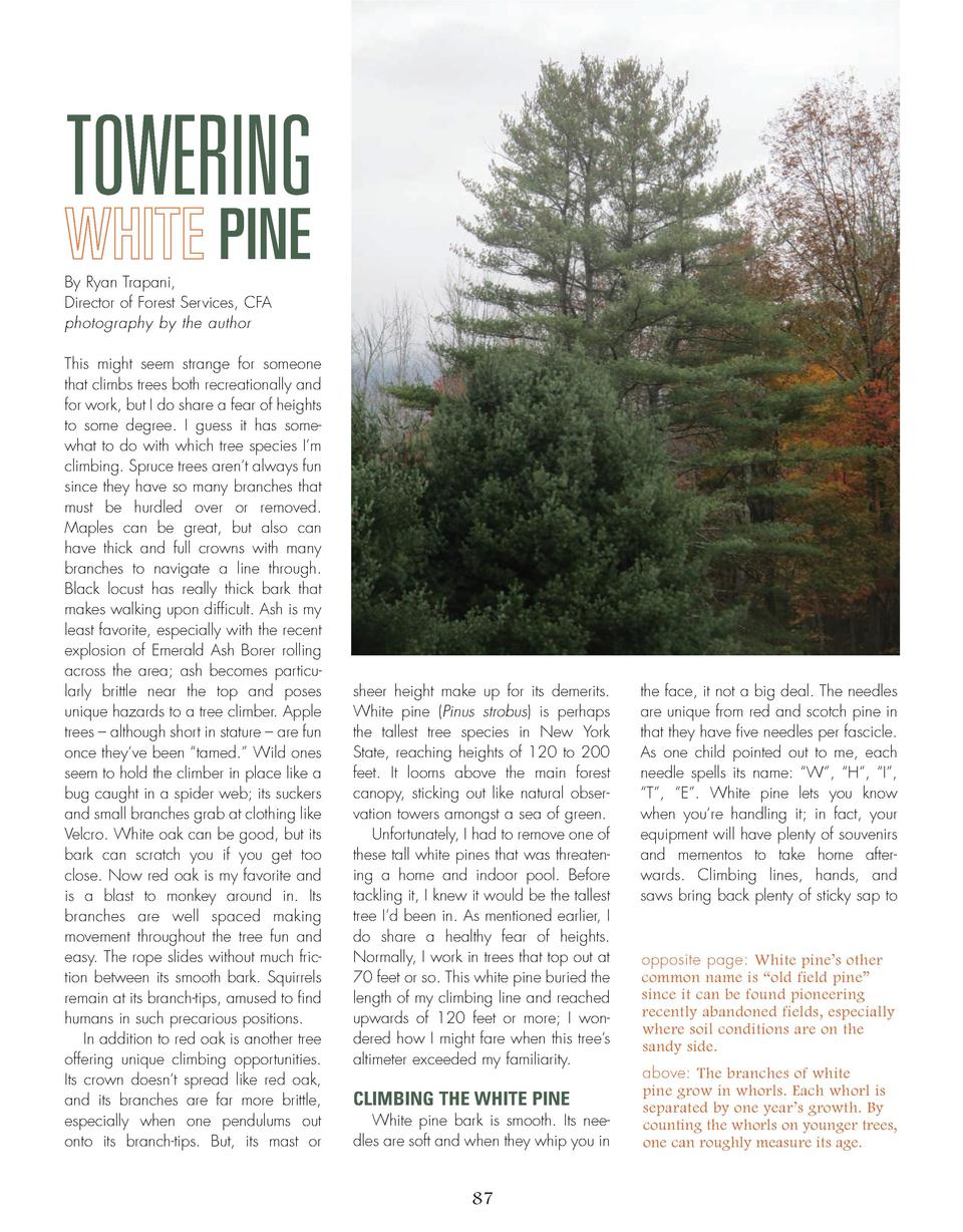 TOWERING WHITE PINE By Ryan Trapani, Director of Forest Services, CFA photography by the author This might seem strange fo...
