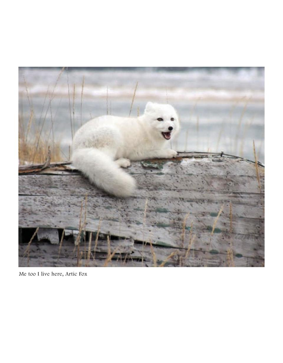 Me too I live here, Artic Fox