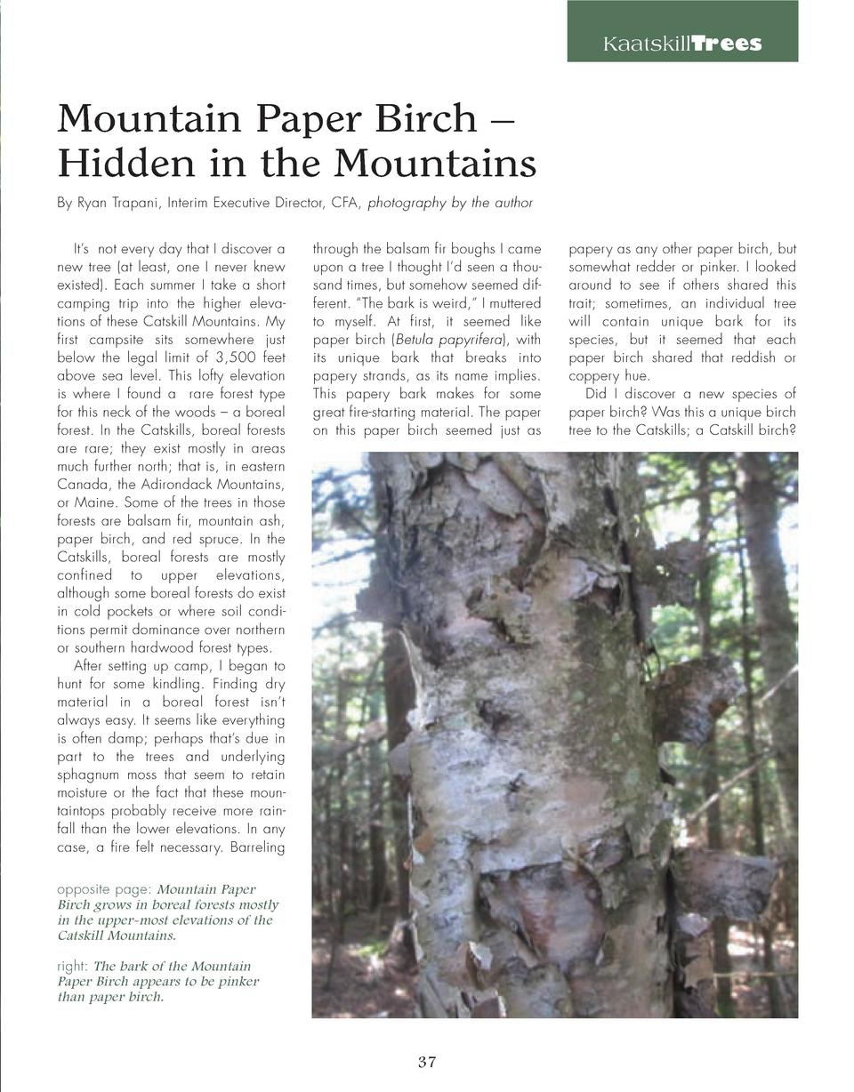 KaatskillTrees  Mountain Paper Birch     Hidden in the Mountains By Ryan Trapani, Interim Executive Director, CFA, photogr...