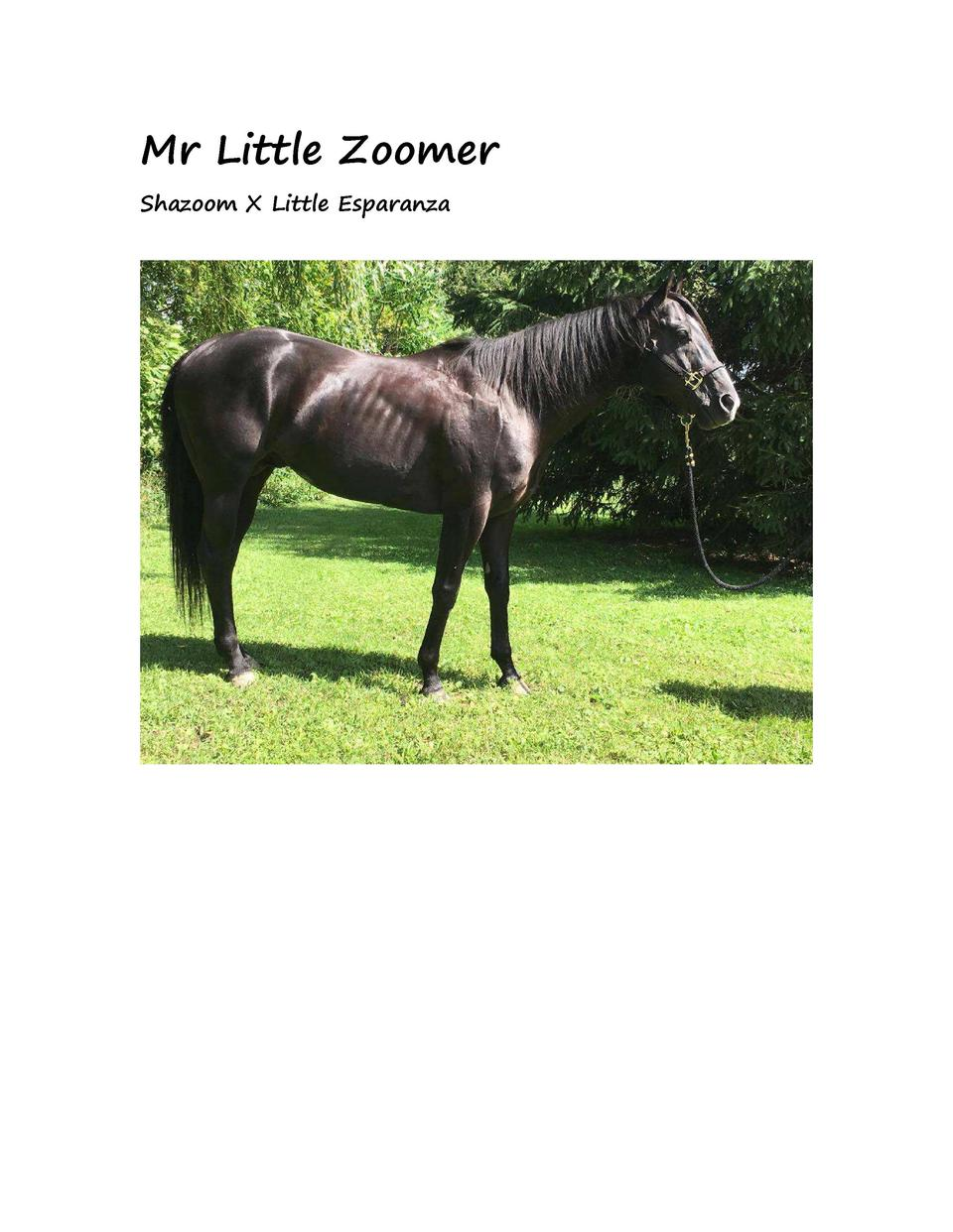 Mr Little Zoomer Shazoom X Little Esparanza