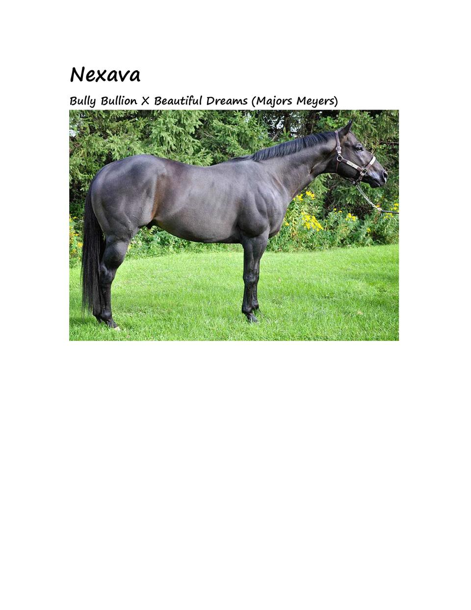 Nexava Bully Bullion X Beautiful Dreams  Majors Meyers