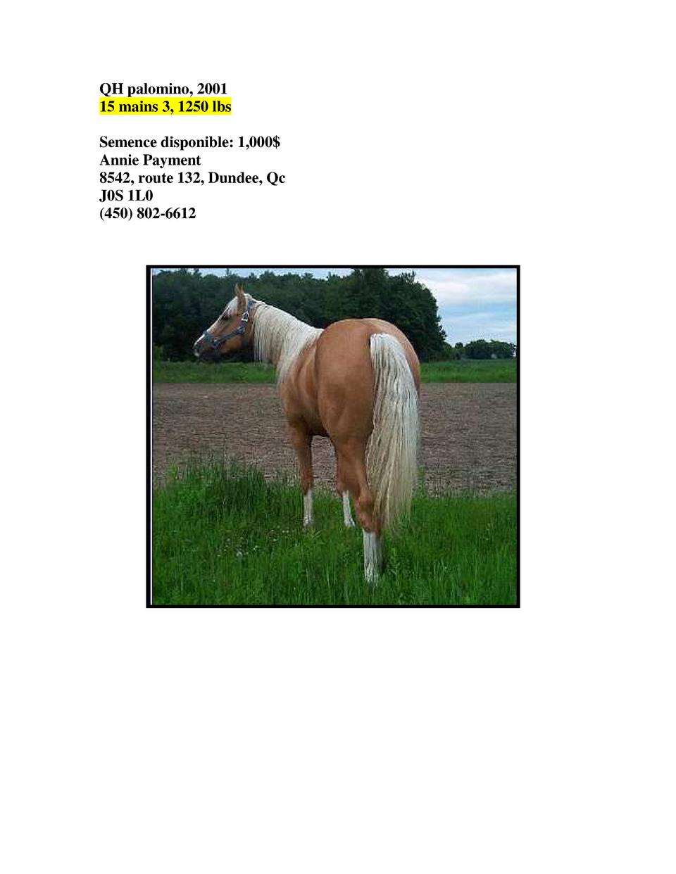 QH palomino, 2001 15 mains 3, 1250 lbs Semence disponible  1,000  Annie Payment 8542, route 132, Dundee, Qc J0S 1L0  450  ...