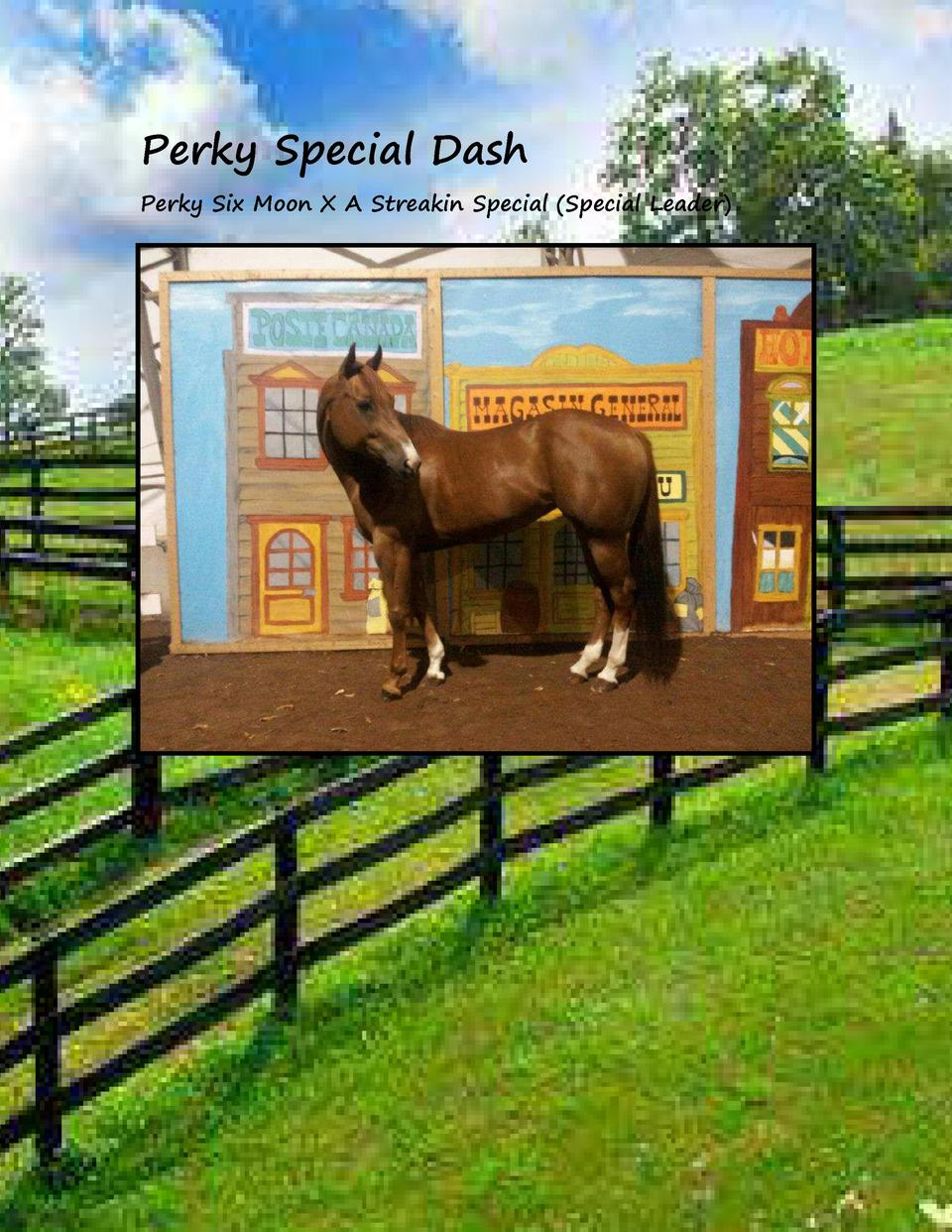 Perky Special Dash Perky Six Moon X A Streakin Special  Special Leader