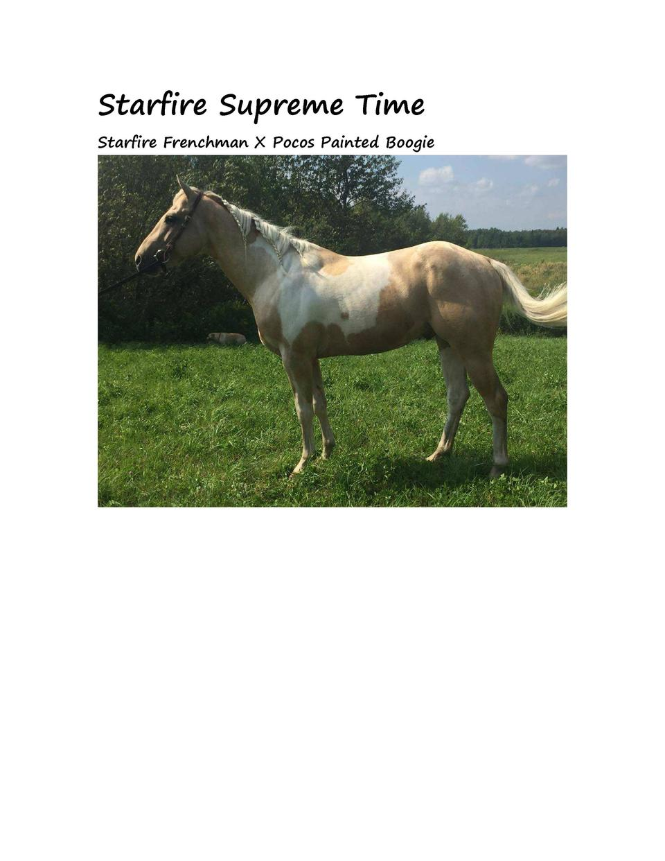 Starfire Supreme Time Starfire Frenchman X Pocos Painted Boogie