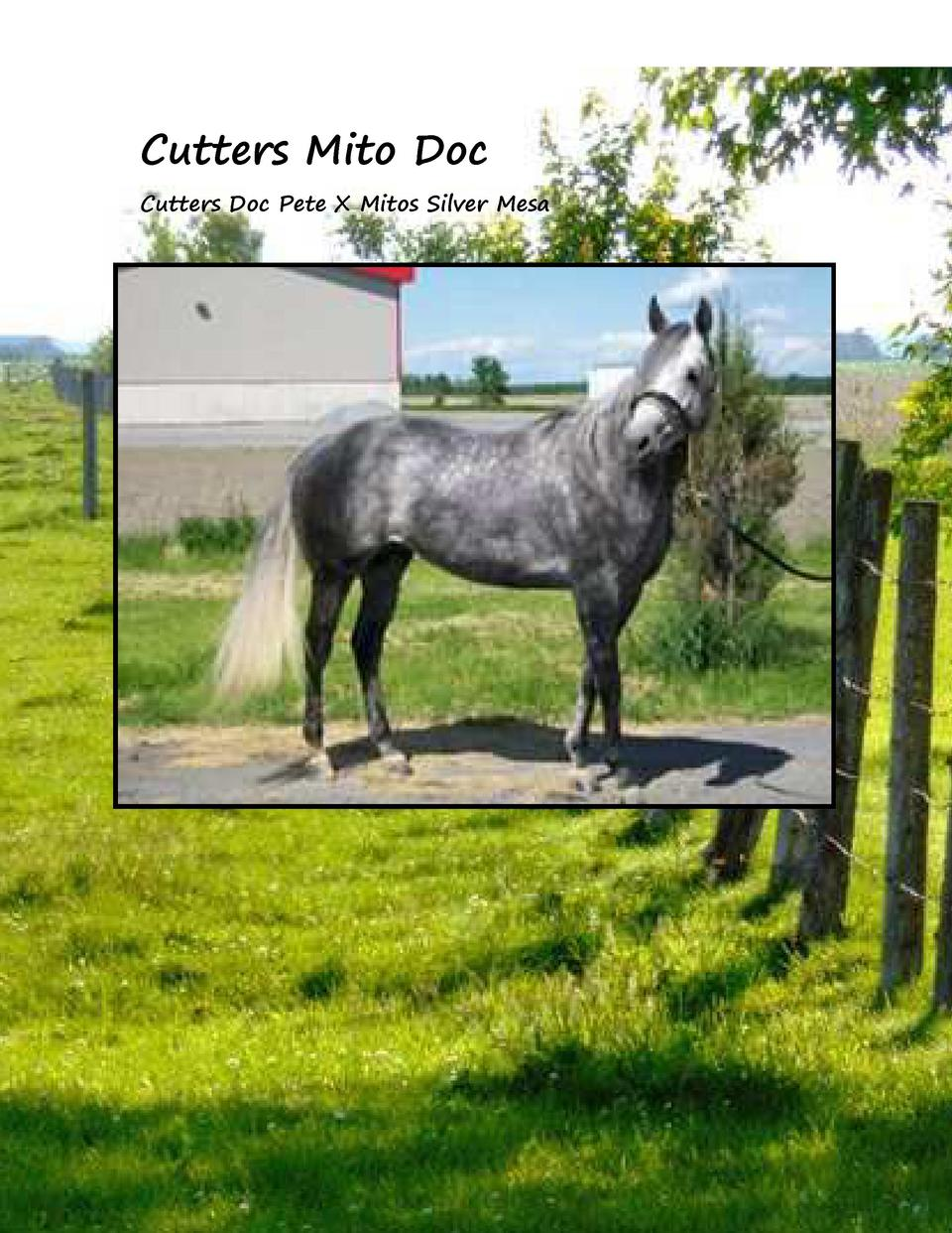 Cutters Mito Doc Cutters Doc Pete X Mitos Silver Mesa