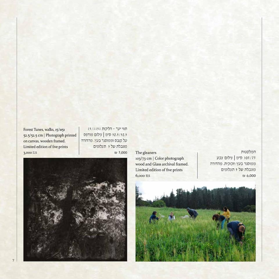 Forest Tunes, walks, 15 1151 52.5 52.5 cm   Photograph printed on canvas, wooden framed. Limited edition of five prints 3,...