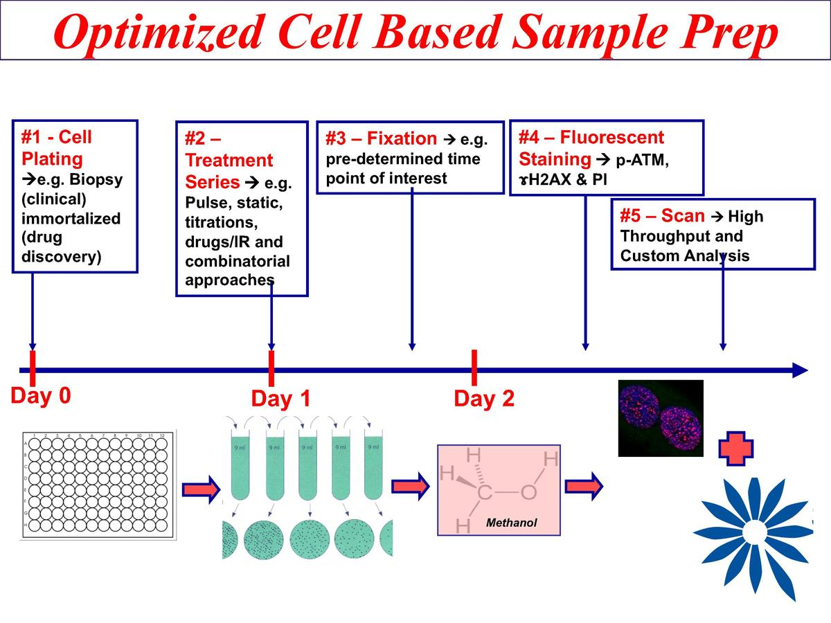 Optimized Cell Based Sample Prep  1 - Cell Plating   e.g. Biopsy  clinical  immortalized  drug discovery   Day 0   2     T...