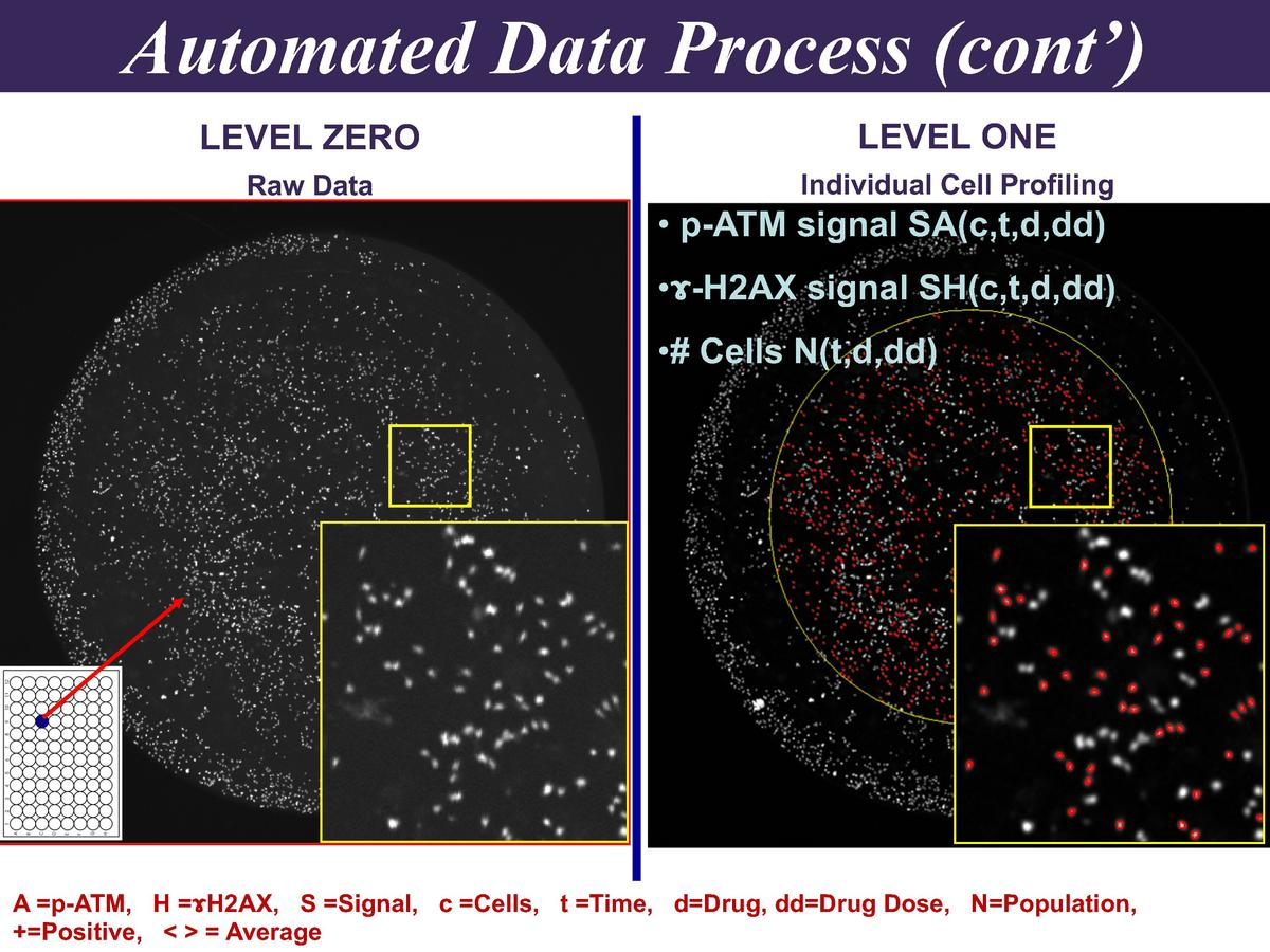 Automated Data Process  cont     LEVEL ZERO  LEVEL ONE  Raw Data  Individual Cell Profiling      p-ATM signal SA c,t,d,dd ...