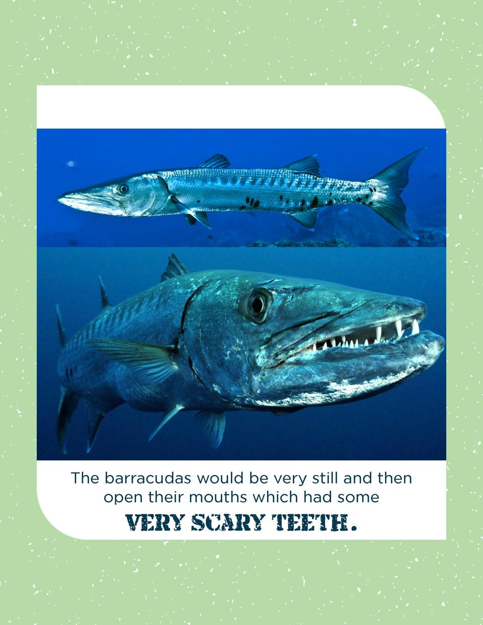 The barracudas would be very still and then open their mouths which had some  very scary teeth.