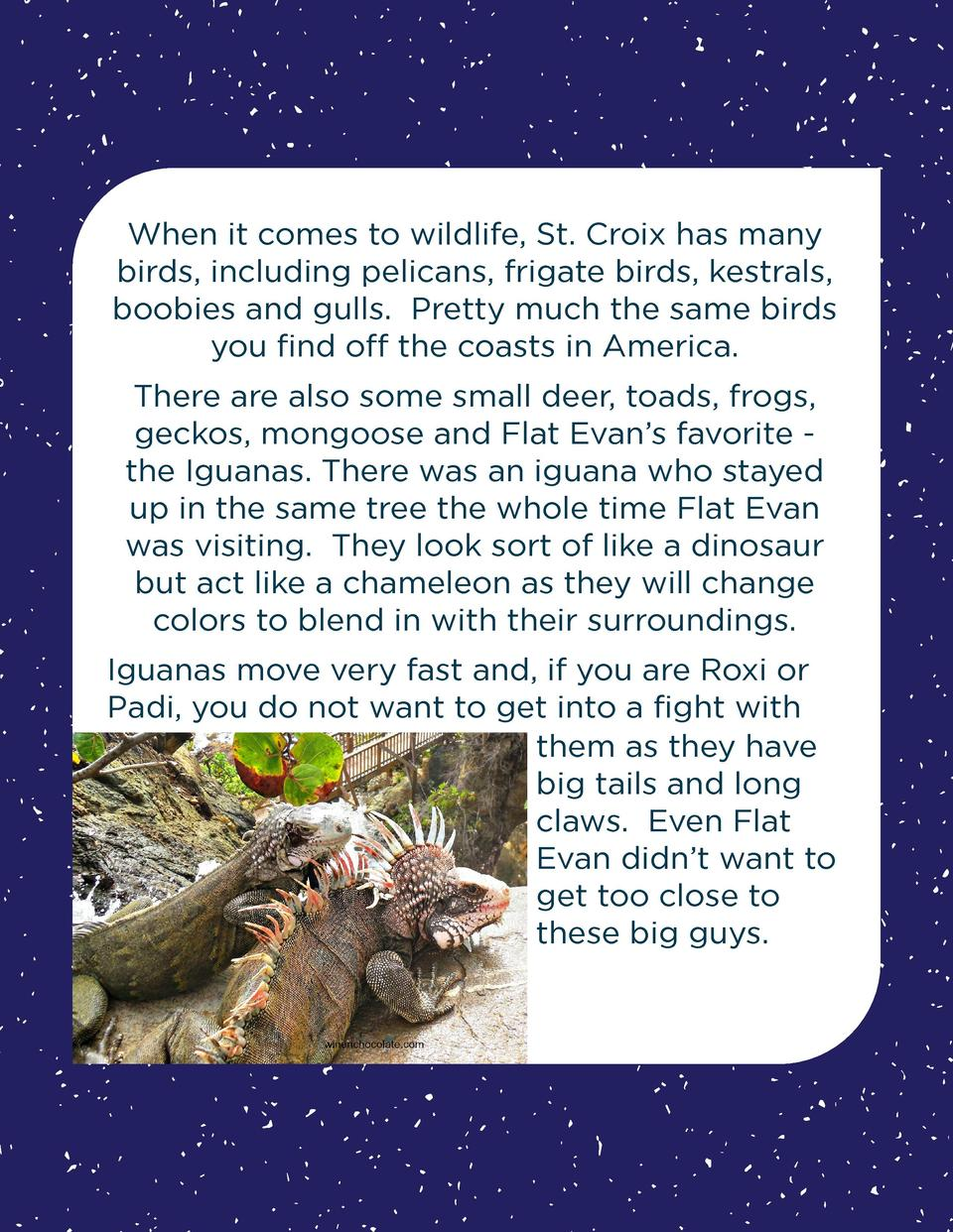 When it comes to wildlife, St. Croix has many birds, including pelicans, frigate birds, kestrals, boobies and gulls. Prett...