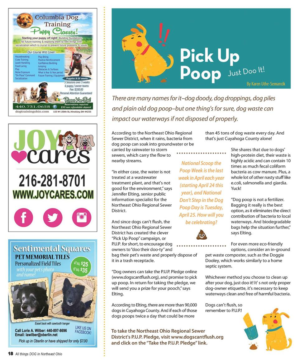 There are many names for it   dog doody, dog droppings, dog piles and plain old dog poop   but one thing s for sure, dog w...