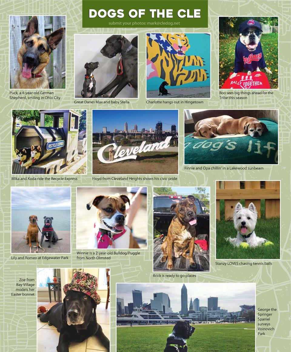 dogs of the cle  I N A U G U R A L  welcome TO CLE DOG  submit your photos  mark cledog.net  I S S U E  We are doggone luc...