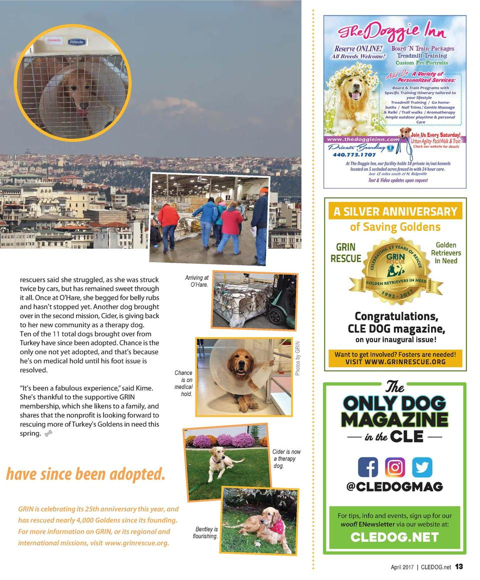 RESCUE EFFORTS  Going Global to Rescue Goldens By Susan Spisak  a need,    explains Lisa Kime, vice president of the North...