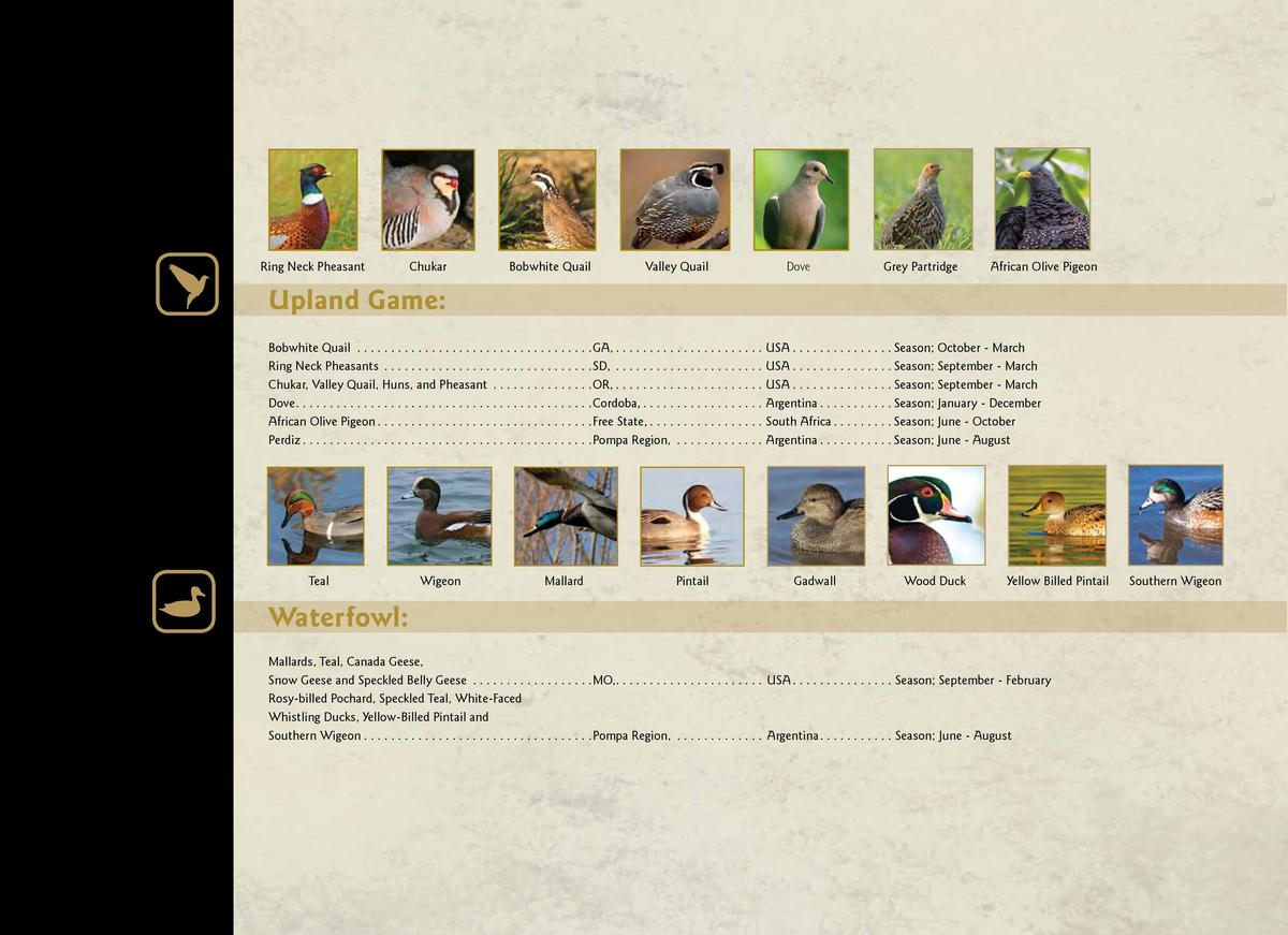 Ring Neck Pheasant  Chukar    Bobwhite Quail   Valley Quail    Dove    Grey Partridge   African Olive Pigeon  Upland Game ...