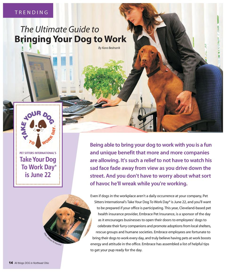 TRENDING  The Ultimate Guide to Bringing Your Dog to Work By Kara Bednarik  Being able to bring your dog to work with you ...