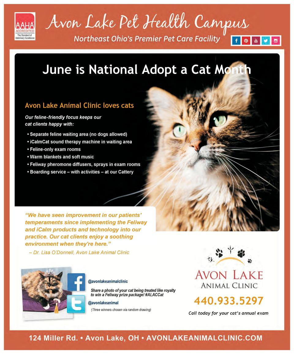 June is National Adopt a Cat Month Avon Lake Animal Clinic loves cats Our feline-friendly focus keeps our cat clients happ...