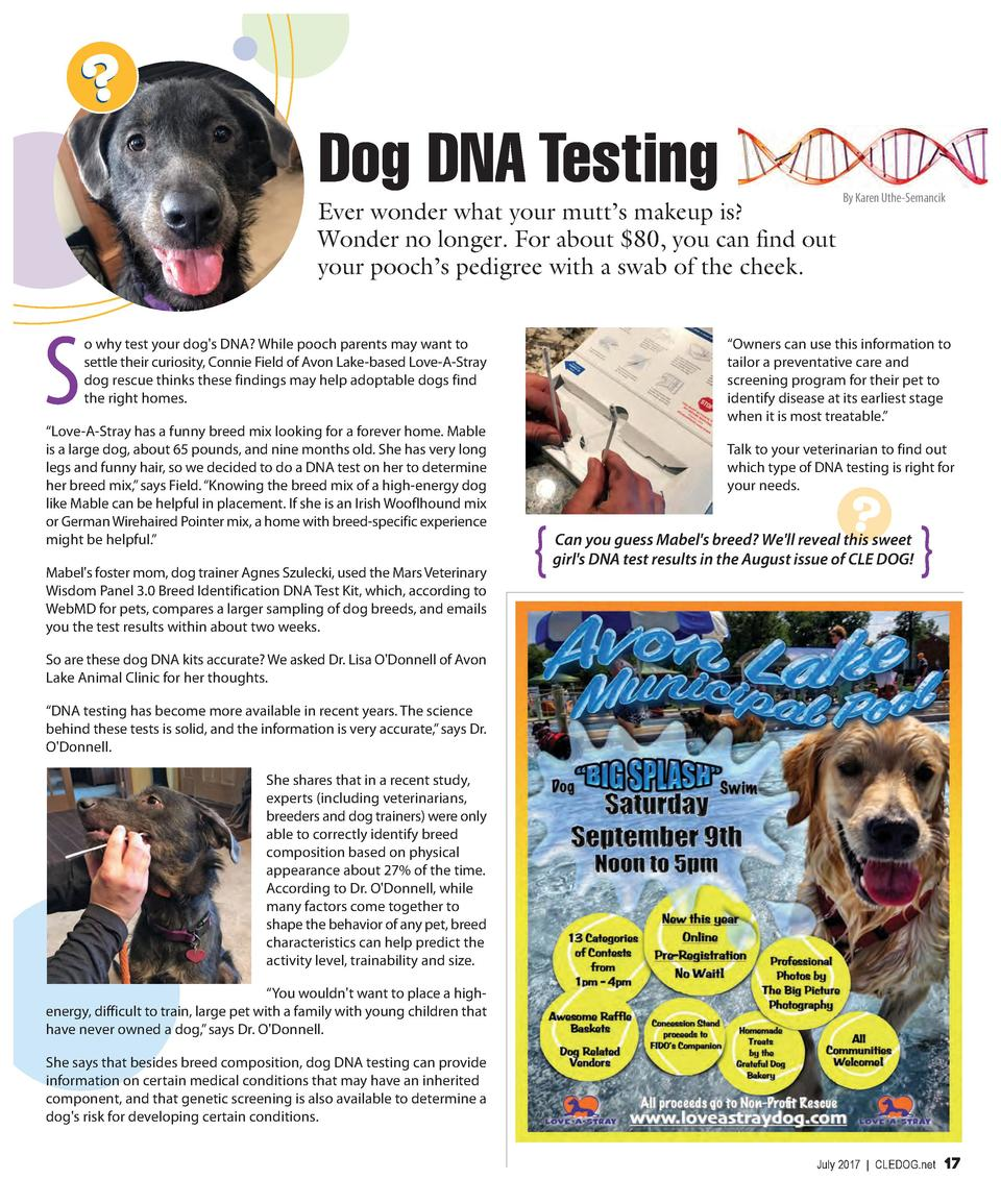Dog DNA Testing Ever wonder what your mutt   s makeup is  Wonder no longer. For about  80, you can find out your pooch   s...