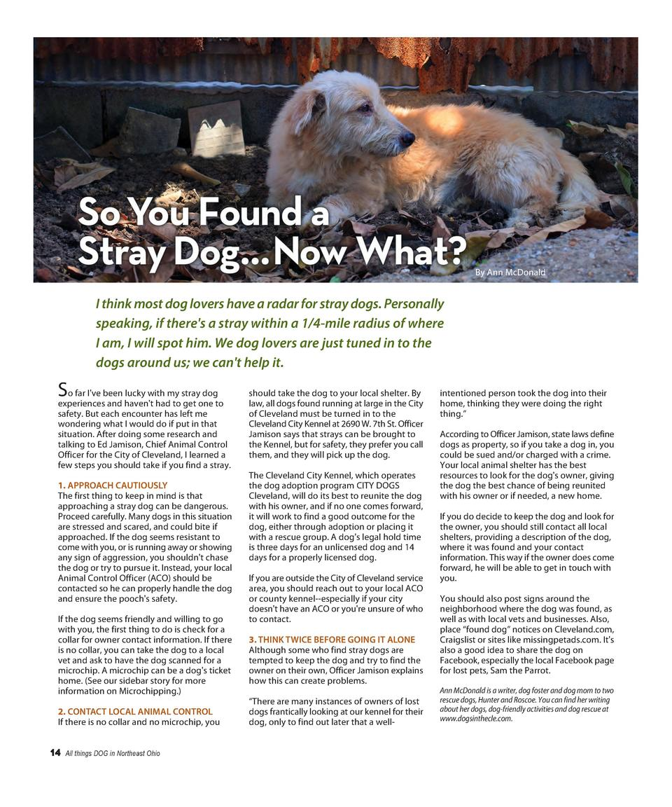 By Ann McDonald  I think most dog lovers have a radar for stray dogs. Personally speaking, if there s a stray within a 1 4...