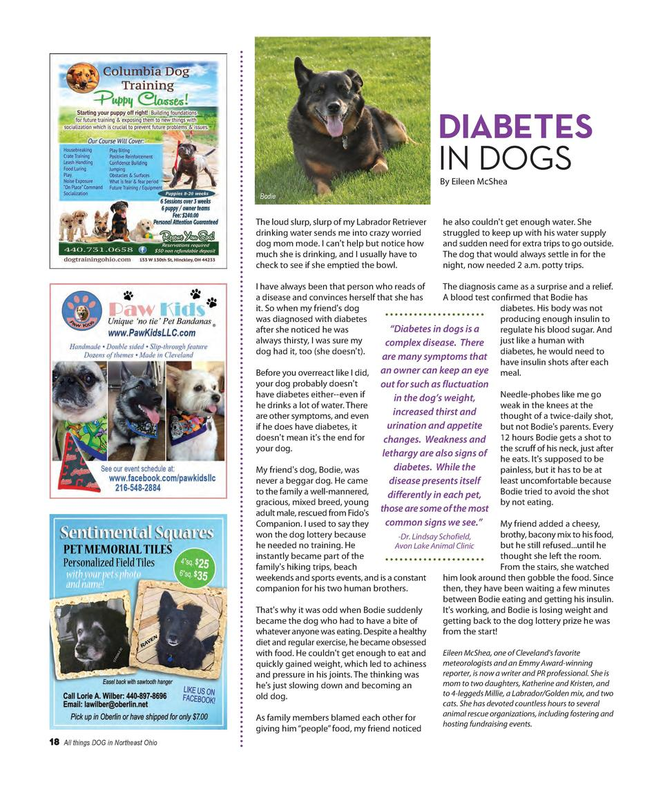 DIABETES IN DOGS By Eileen McShea Bodie  The loud slurp, slurp of my Labrador Retriever drinking water sends me into crazy...